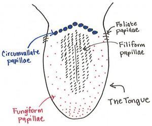 the science behind taste fema rh femaflavor org
